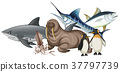 Different types of sea animals on white 37797739