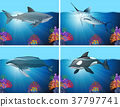 Sharks and whales in the ocean 37797741