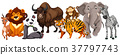 Different kinds of animals on white background 37797743
