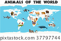 Different types of animals 37797744