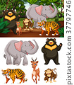 Wild animals in the forest 37797746