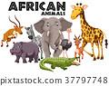 white, background, animal 37797748