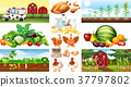 Farm scenes with vegetables and chickens 37797802