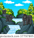 Three gorillas at the waterfall 37797805
