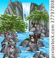 Waterfall scene with many raccoons 37797808