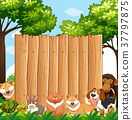 Wooden board with wild animals in garden 37797875