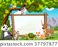 Board template with wild animals in zoo 37797877