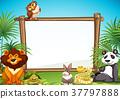 Border templae with wild animals in background 37797888