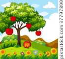 tree, apple, park 37797899
