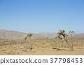 加州沙漠 37798453