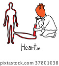main function of human heart is to propel blood  37801038