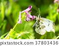 蝴蝶 花朵 花卉 37803436
