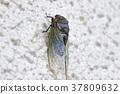 飞蛾 蝗虫 蝉 37809632