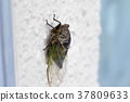 飞蛾 蝗虫 蝉 37809633