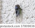 飞蛾 蝗虫 蝉 37809636