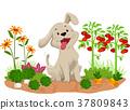 개, 강아지, 야채 37809843