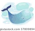 Blue Whale Underwater 37809894