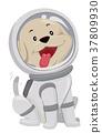 Cute Dog Astronaut Spacesuit 37809930