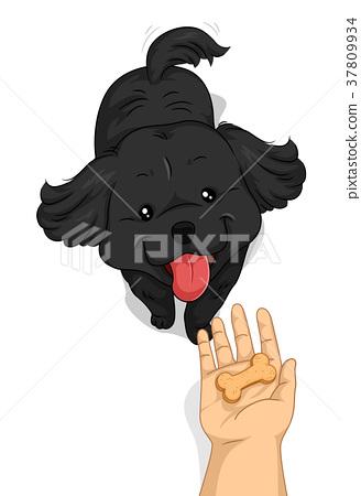 Dog Hand Treat Biscuit 37809934