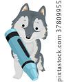 Cute Arctic Wolf Crayon 37809955