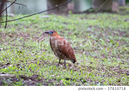 一隻鳥 37810718