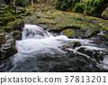 yin waterfall, akame 48 waterfalls, mie prefecture 37813201