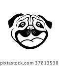 Smiley Dog Face.  37813538