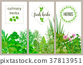 Farm fresh cooking herbs. Set of culinary cards 37813951
