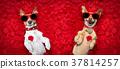 dog pet petal 37814257