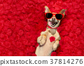 dog pet petal 37814276