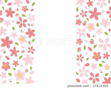 cherry blossom, frame, vector 37816300