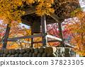 彩色楓樹和修善寺鐘樓 37823305