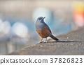 鳥兒 鳥 小鳥 37826823