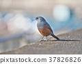 鳥兒 鳥 小鳥 37826826