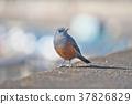 鳥兒 鳥 小鳥 37826829