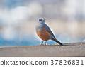 bird, birds, fowls 37826831