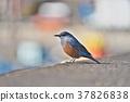 鳥兒 鳥 小鳥 37826838