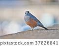 鳥兒 鳥 小鳥 37826841