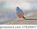 鳥兒 鳥 小鳥 37826847