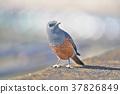 鳥兒 鳥 小鳥 37826849