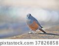 鳥兒 鳥 小鳥 37826858