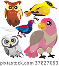 five birds on white background 37827093