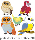 five birds on white background 37827098