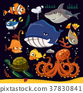 Funny marine life collection 37830841
