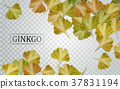 Ginkgo biloba elements 37831194