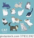 Adorable cat breeds collection 37831392