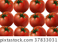 red tomatoes illustration 37833031