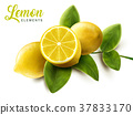 Lemon and green leaves elements 37833170