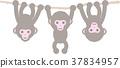 猴子 小猴子 动物 37834957