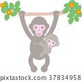 猴子 动物 父母身份 37834958